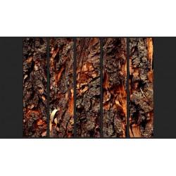 Fototapeta  Czas wyryty w drzewie