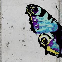 Fototapeta  Motyle i beton