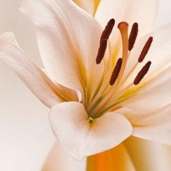 Fototapeta  Kwiatowe warkocze