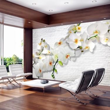 Fototapeta  Orchidee na ścianie