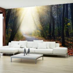 Fototapeta Droga przez las