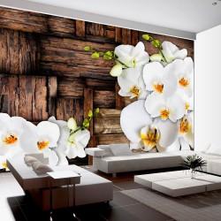 Fototapeta - Kwitnące orchidee
