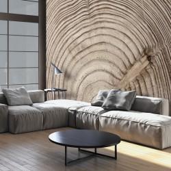 Fototapeta - Słój drewna