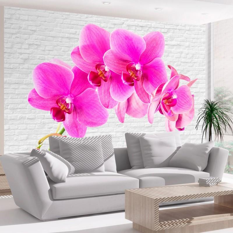 Fototapeta  Różowe pobudzenie