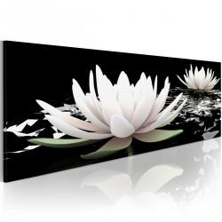 Obraz - Rejs lilii