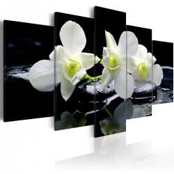 Obraz - Melancholijne orchidee