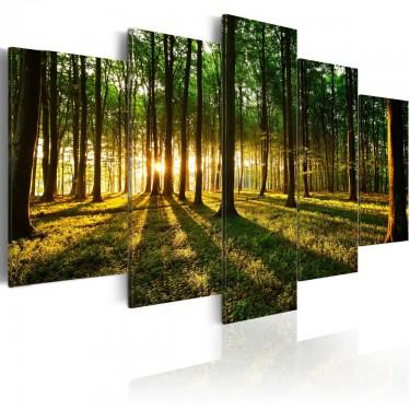 Obraz  Przygoda w lesie