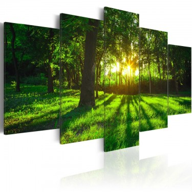 Obraz  Poranek w lesie