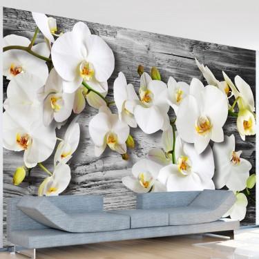 Fototapeta - Oziębłe orchidee III