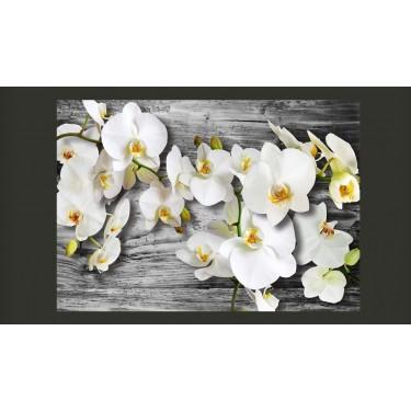 Fototapeta  Oziębłe orchidee III