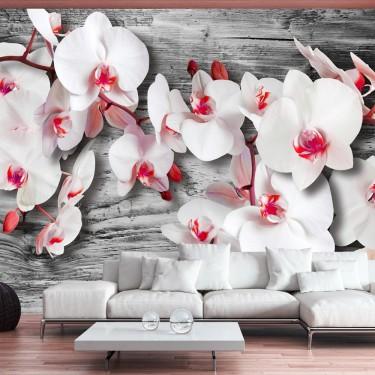 Fototapeta - Oziębłe orchidee