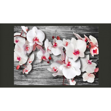 Fototapeta  Oziębłe orchidee