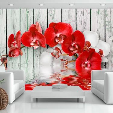 Fototapeta  Rubinowa orchidea