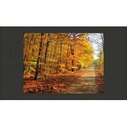 Fototapeta  Beech forest