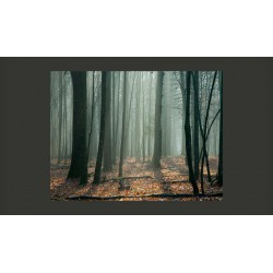 Fototapeta  Witches forest