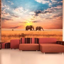 Fototapeta Słonie na afrykańskiej sawannie