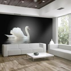 Fototapeta - łabędź (czarno-biały)