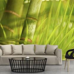 Fototapeta - bambus - natura zen