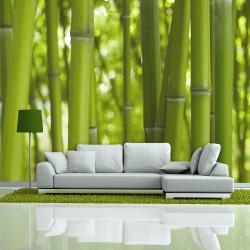 Fototapeta - bambus - zielony