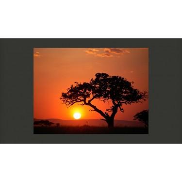 Fototapeta  Afryka zachód słońca