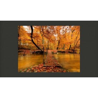 Fototapeta  Drewniany mostek w lesie