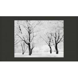 Fototapeta  Drzewa  pejzaż zimowy