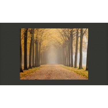 Fototapeta  Journey to the unknown