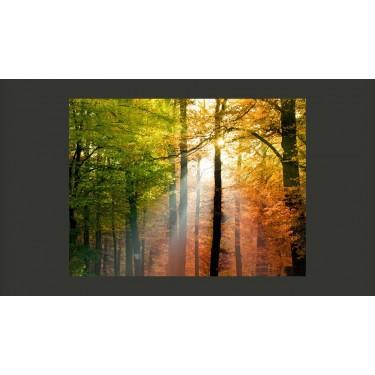 Fototapeta  Piękna jesień