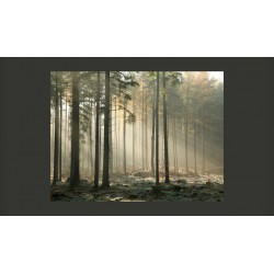 Fototapeta  Foggy November morning