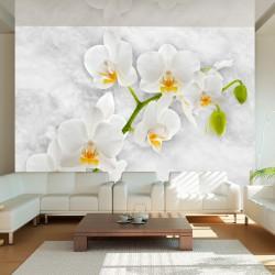 Fototapeta - Liryczna orchidea - biel