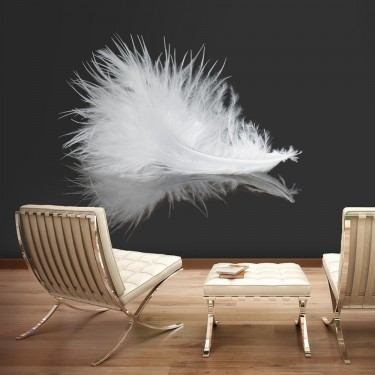 Fototapeta  White feather
