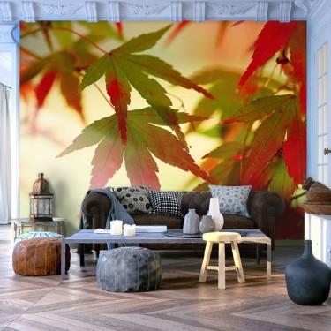 Fototapeta  Kolorowe liście