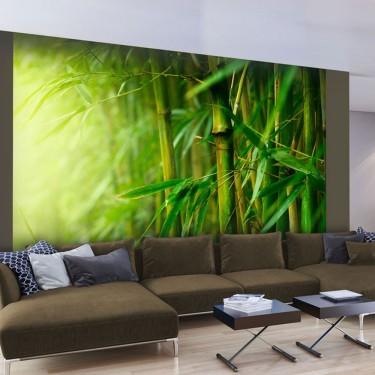 Fototapeta  dżungla  bambus