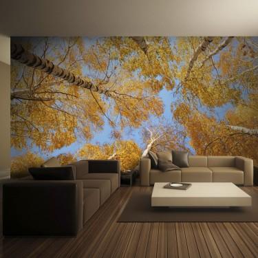 Fototapeta  Jesienne korony drzew