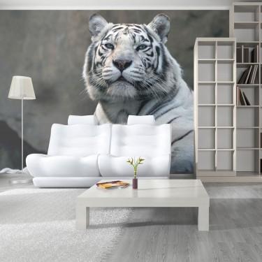 Fototapeta  Tygrys bengalski w zoo