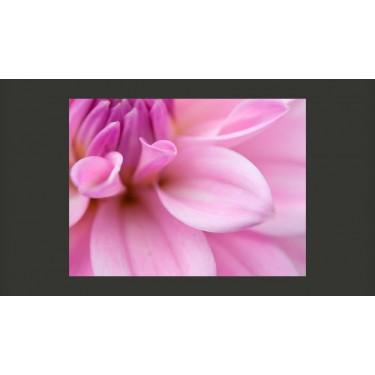 Fototapeta  Kwiatowe płatki  dalia