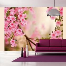 Fototapeta - Pink azalea