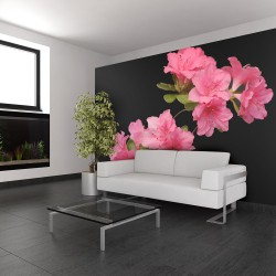 Fototapeta - Azalea in Black