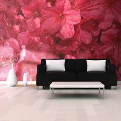 Fototapeta - Red azalea