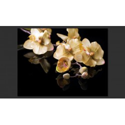 Fototapeta  Orchids in ecru color
