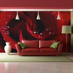 Fototapeta Czerwona róża i krople rosy