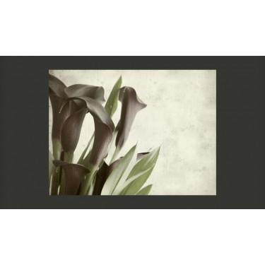 Fototapeta  Fioletowe kalie  efekt starego papieru