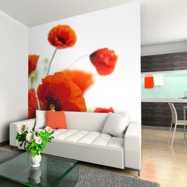 Fototapeta  Poppies on the wihite background
