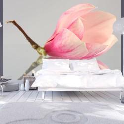Fototapeta Samotny kwiat magnolii