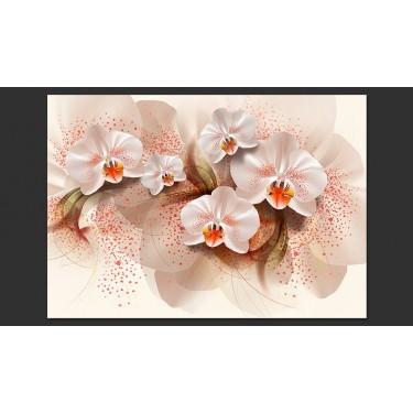 Fototapeta  Herbaciane orchidee