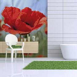 Fototapeta - Maki, intensywny czerwony kolor
