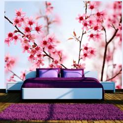 Fototapeta Symbol Japonii kwiaty wiśni sakura