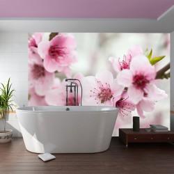 Fototapeta  Kwitnąca wiśnia  różowe kwiatuszki