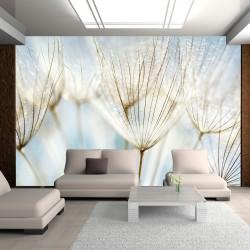 Fototapeta - Abstrakcyjne tło - nasiona dmuchawca