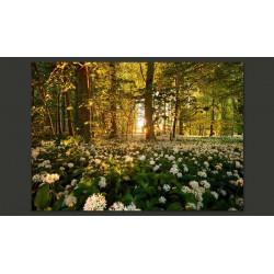 Fototapeta  Leśna flora